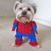 Superheld-Kostüm von Spidermann fur Haustier