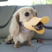 Weiche Silikon-Gemütliche Gelbe Duckbill Ente-Mund Anti Beißen-Barking Haustier Hund Einstellbare Sicherheitsmask Cage Muzzle