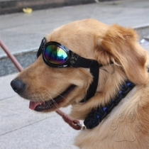 Fashion Round Frame Sunglasses for Pets