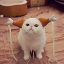 Kreative Kopfbedeckung für Haustiere im Hofdamenstil