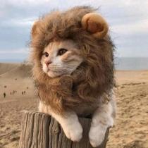 Lustige Perücke für Katze Dress Up Hut für Haustiere
